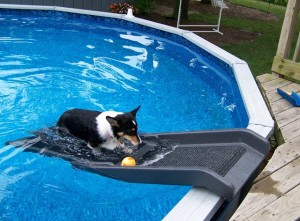 Dog Backyard Pool Slide