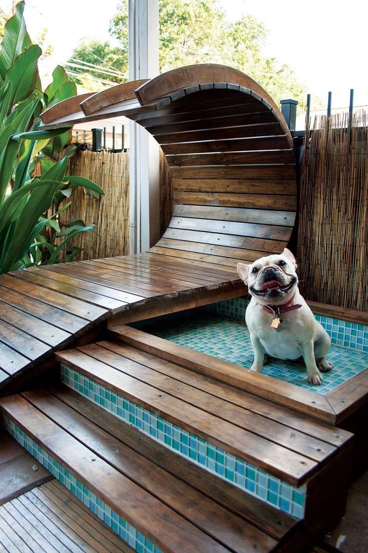 Dog Pool Slide Home Alone