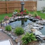 Best Fish for Garden Ponds