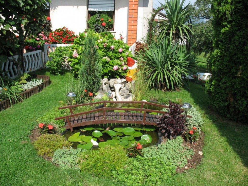 Best Fish for Small Garden Pond