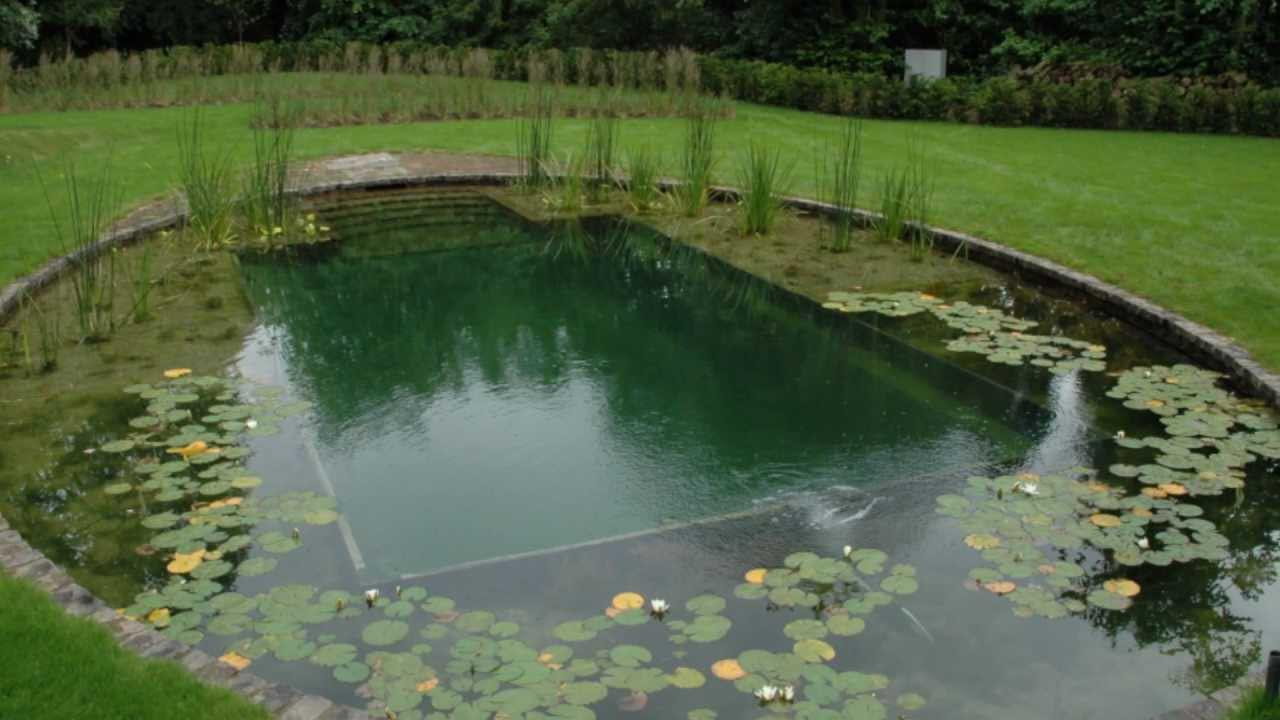 Diy natural swimming pool construction backyard design ideas for Pond swimming pool