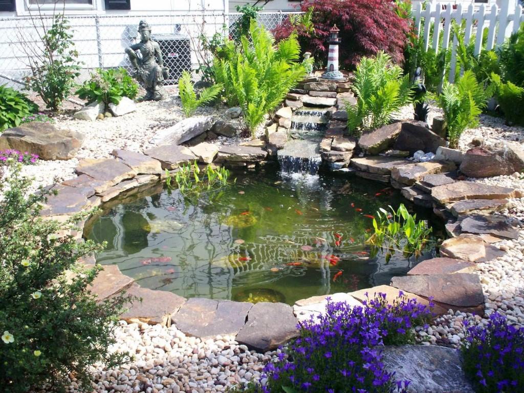 Fish for Garden Ponds