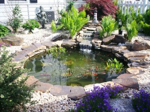 Fish for Garden Ponds
