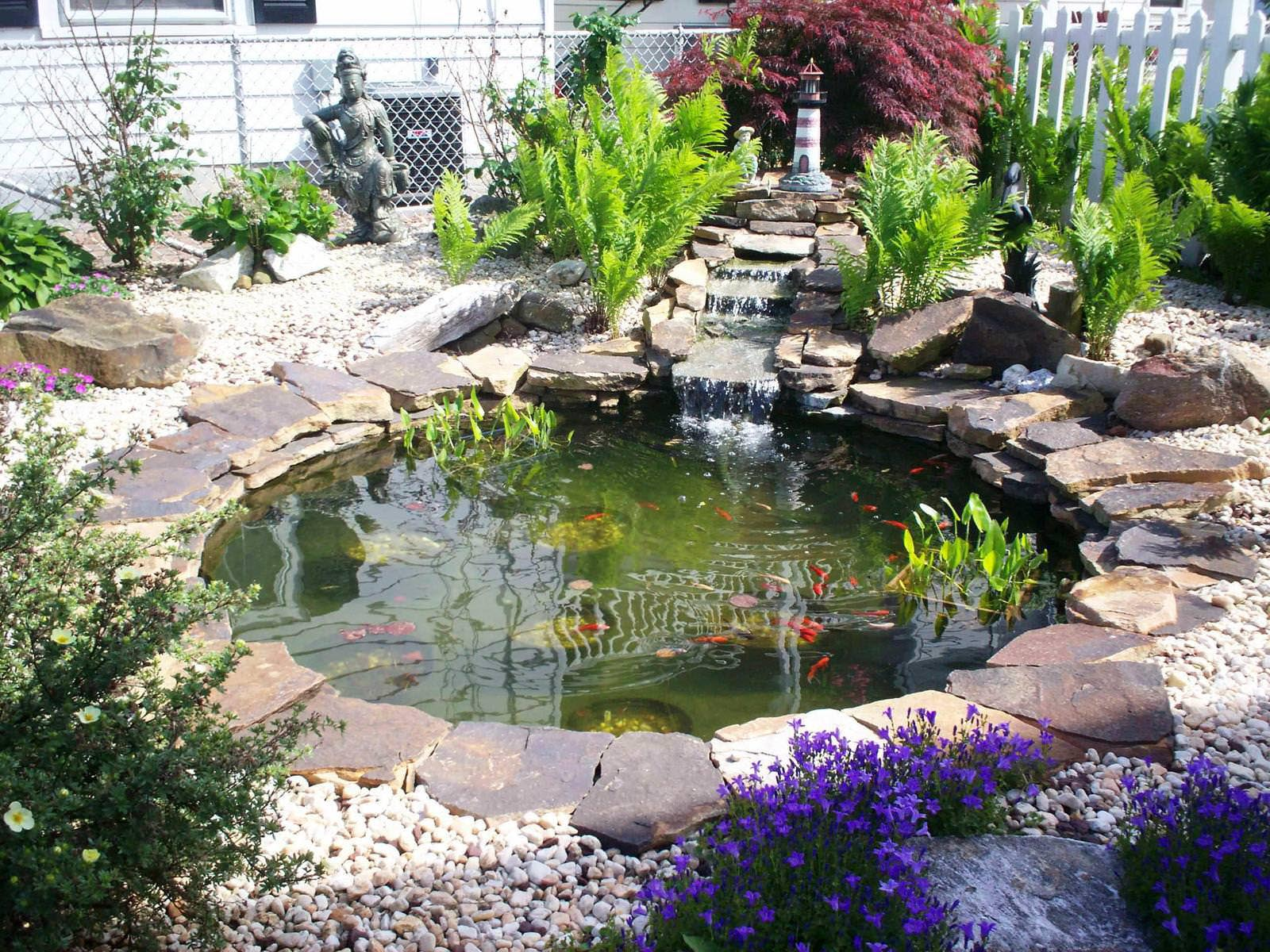 Fish for garden ponds backyard design ideas for Koi pond garden