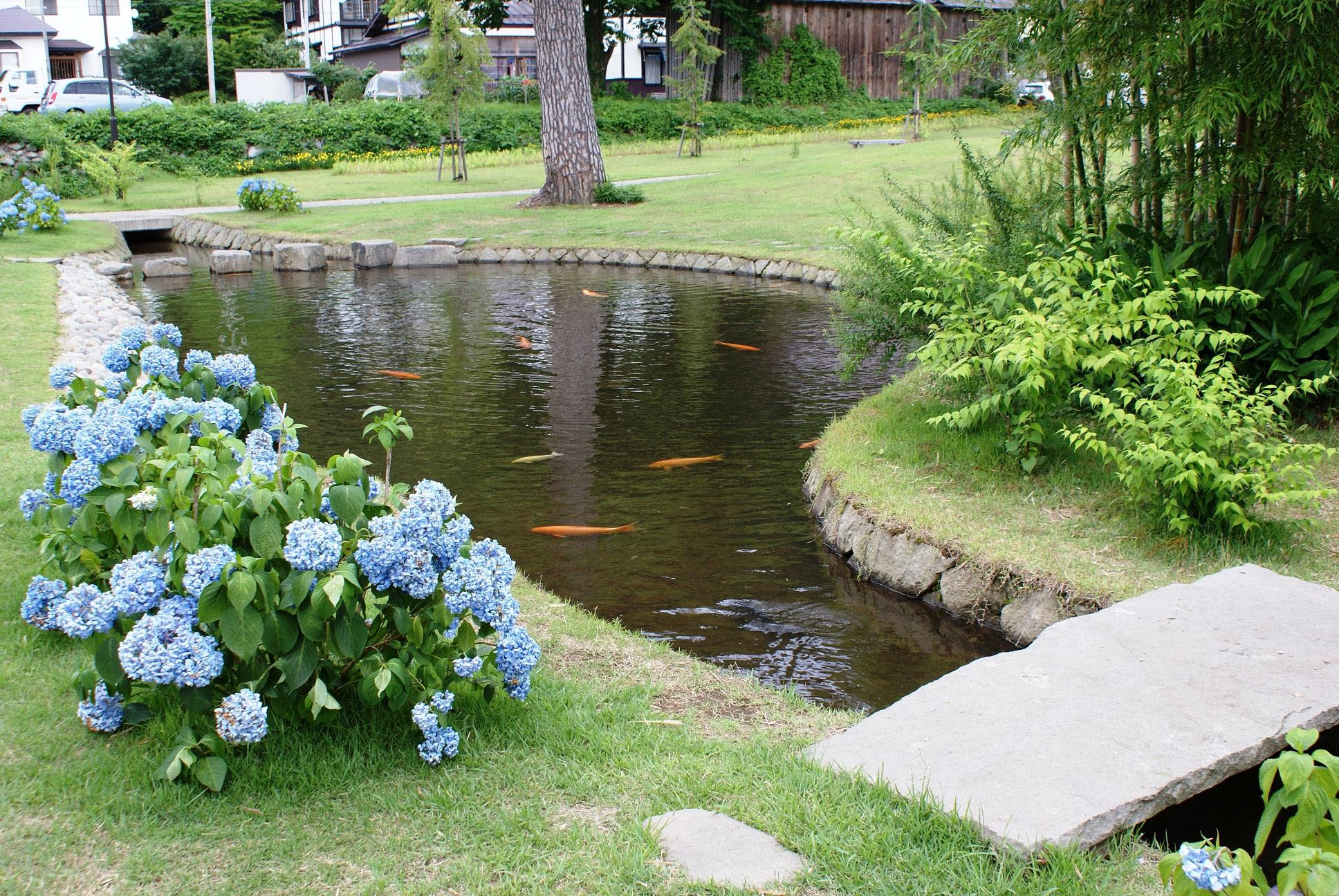 Garden pond fish is very effectively looked in the water for Large outdoor fish ponds