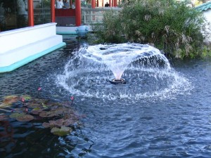Floating Fountains for Small Ponds