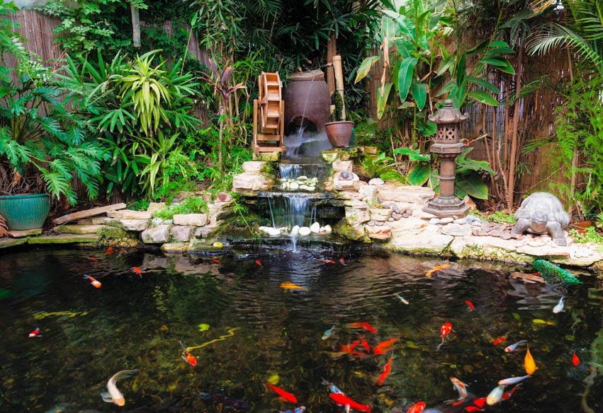 Free standing garden fish ponds backyard design ideas for Fish suitable for small pond