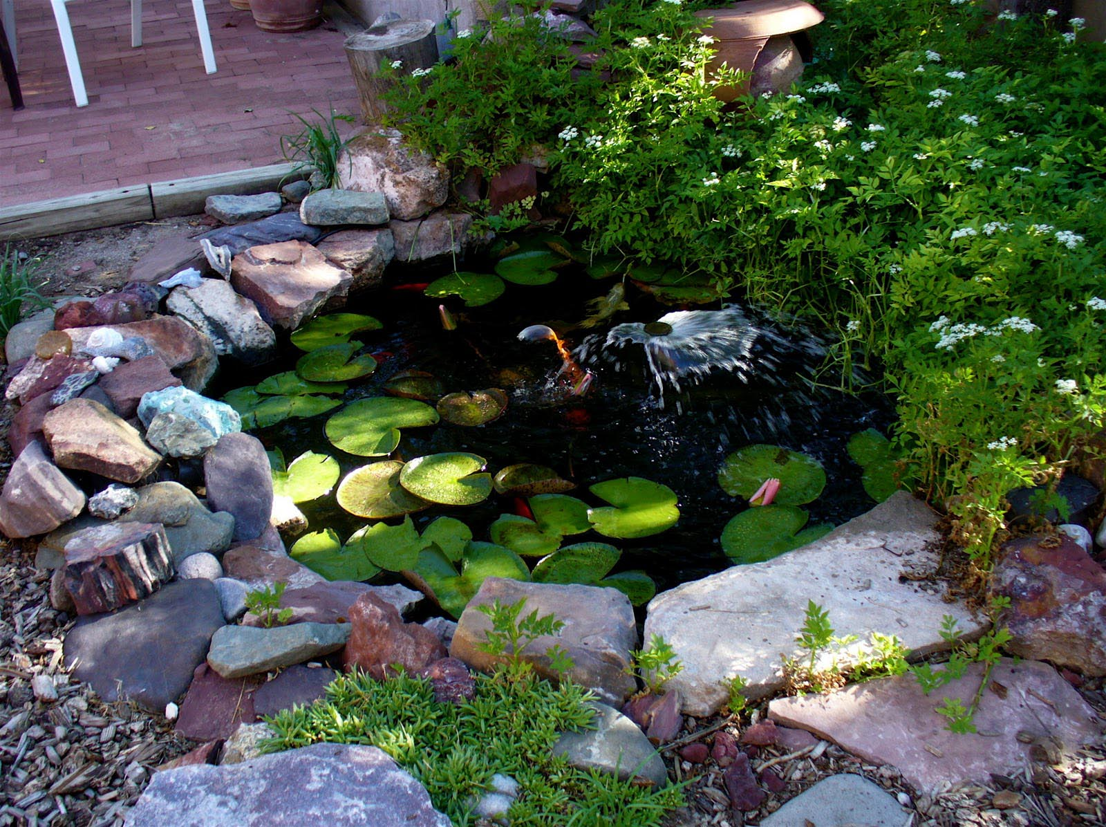 Garden fish pond ideas backyard design ideas for Goldfish pond ideas