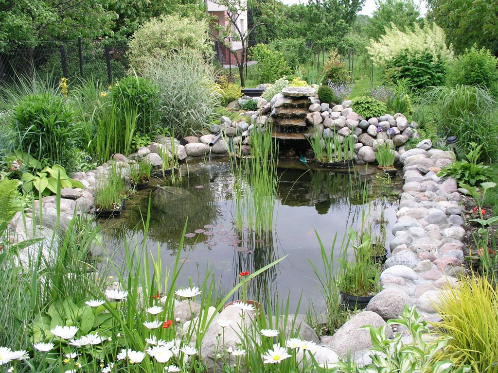 Garden Pond Fish Types