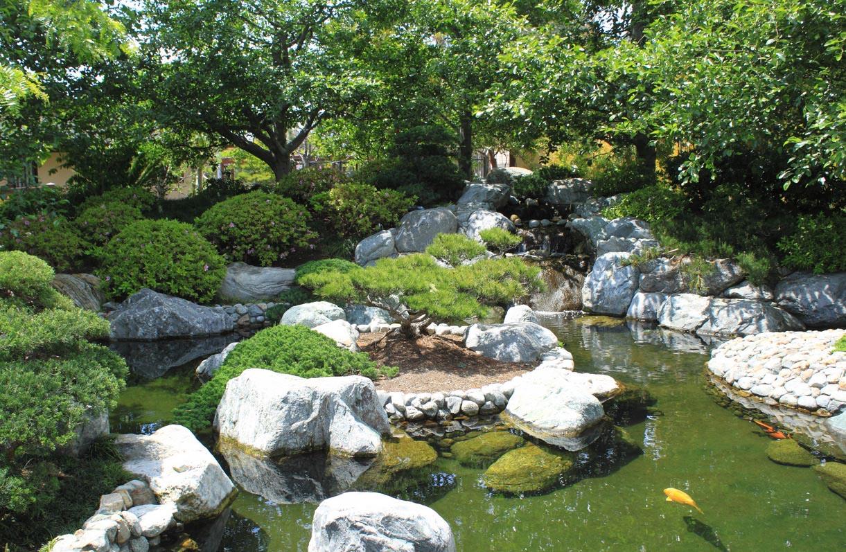 Japanese Fish Ponds Gardens