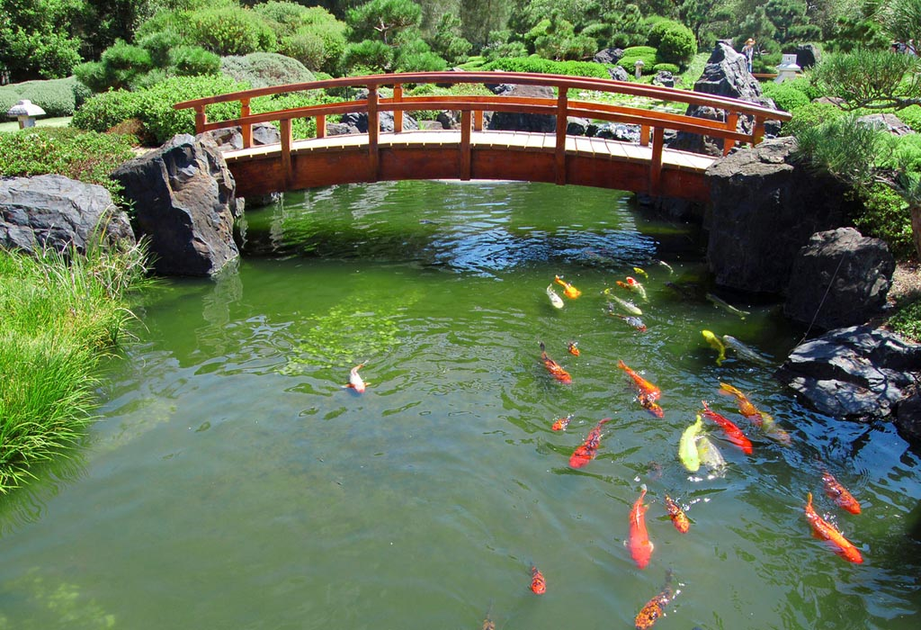 Making a Fish Pond in Your Garden