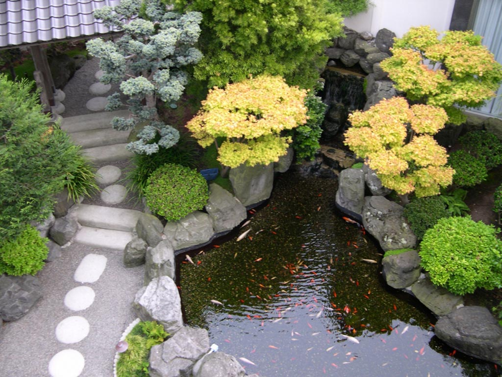 Small Fish Pond in Garden