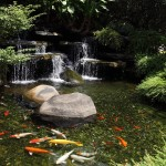 Types of Fish for Garden Ponds