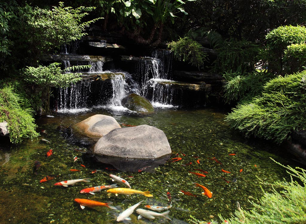 Types of fish for garden ponds backyard design ideas for Fish pond landscaping